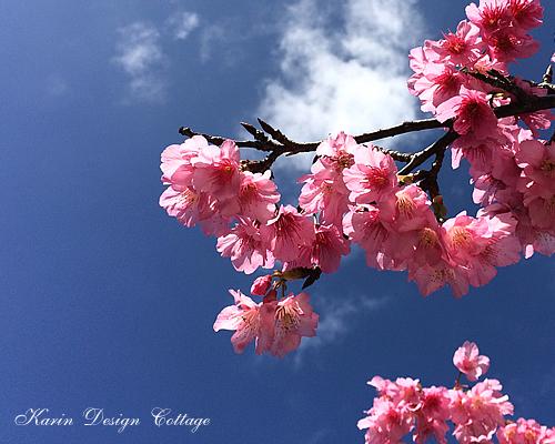 2月桜と沖縄の空
