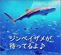 秋の沖縄家族旅行美ら海水族館